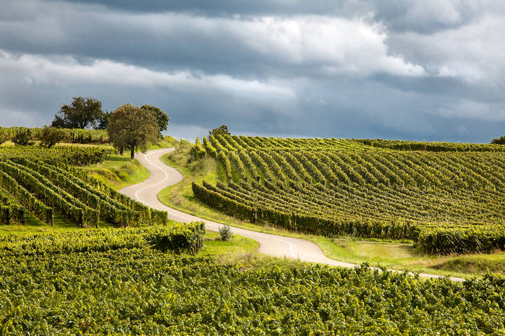 Famouse Alsace wine route