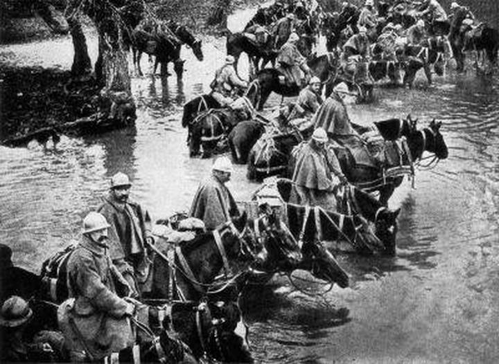 French train horses resting in the river en route to Verdun